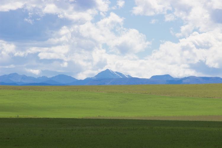 kpardell okotoks landscape 4-9231