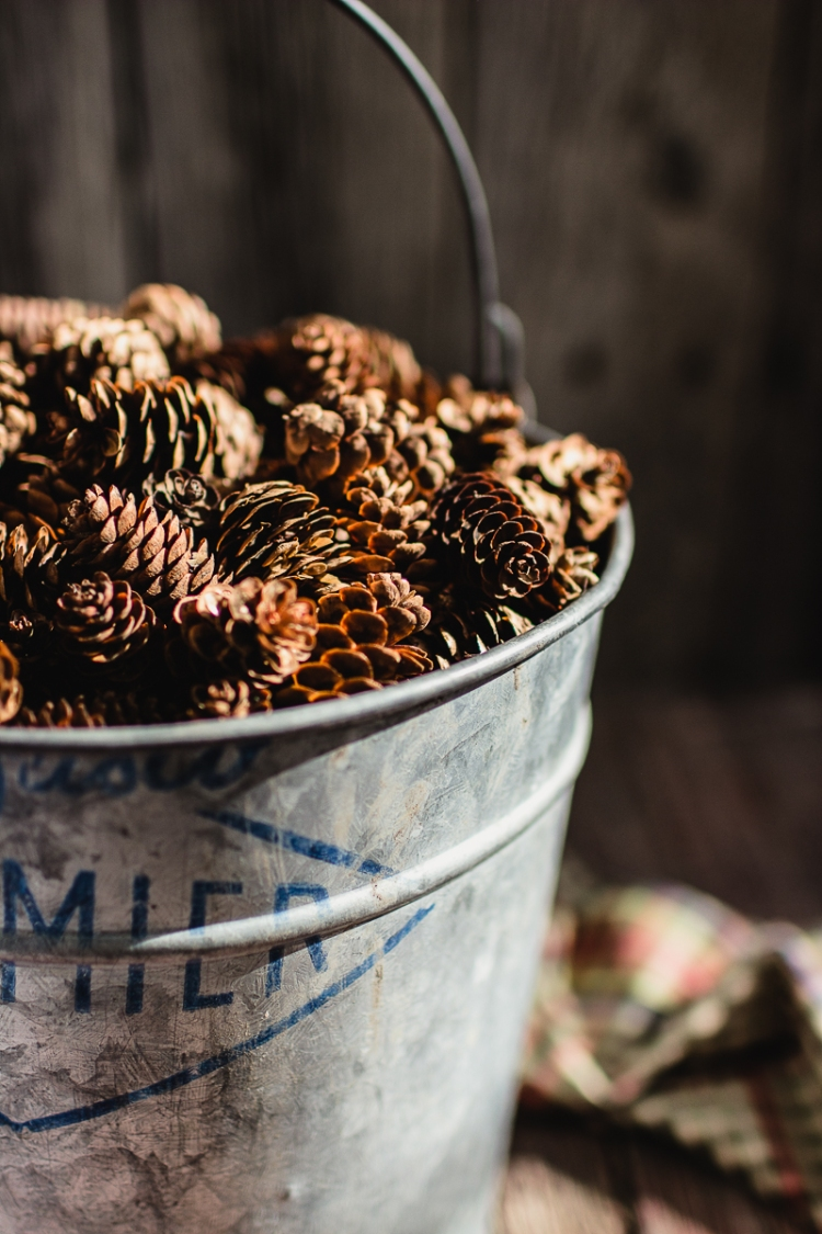 kpardell-wednesday-pine-cones-0994