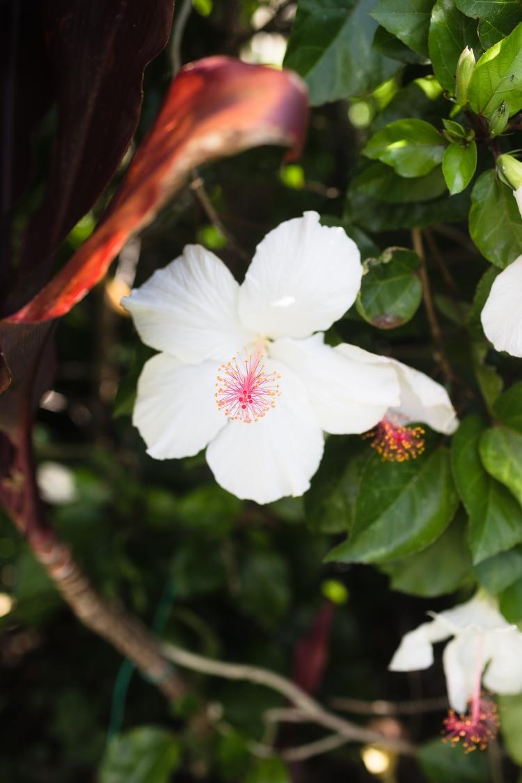 kpardell jasmine-20174358