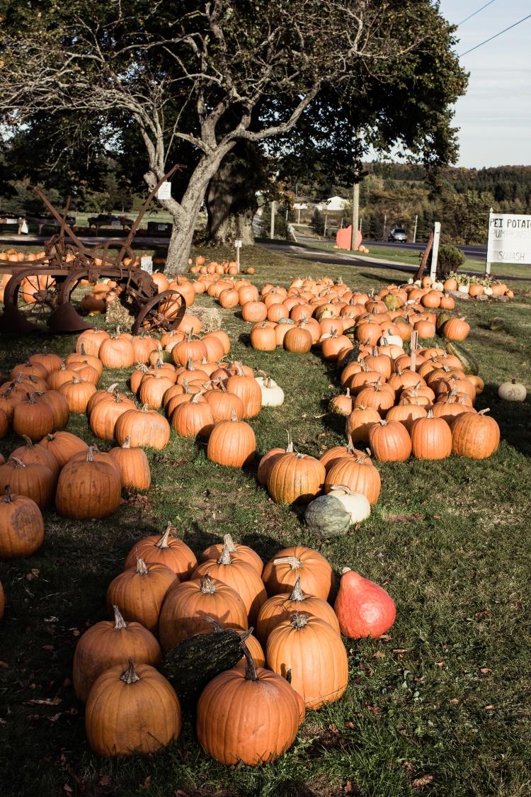 kpardell pumpkins-2173