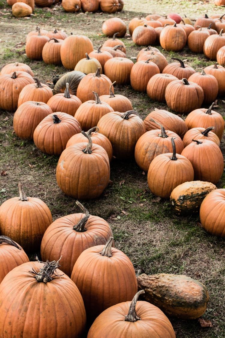 kpardell pumpkins-2184