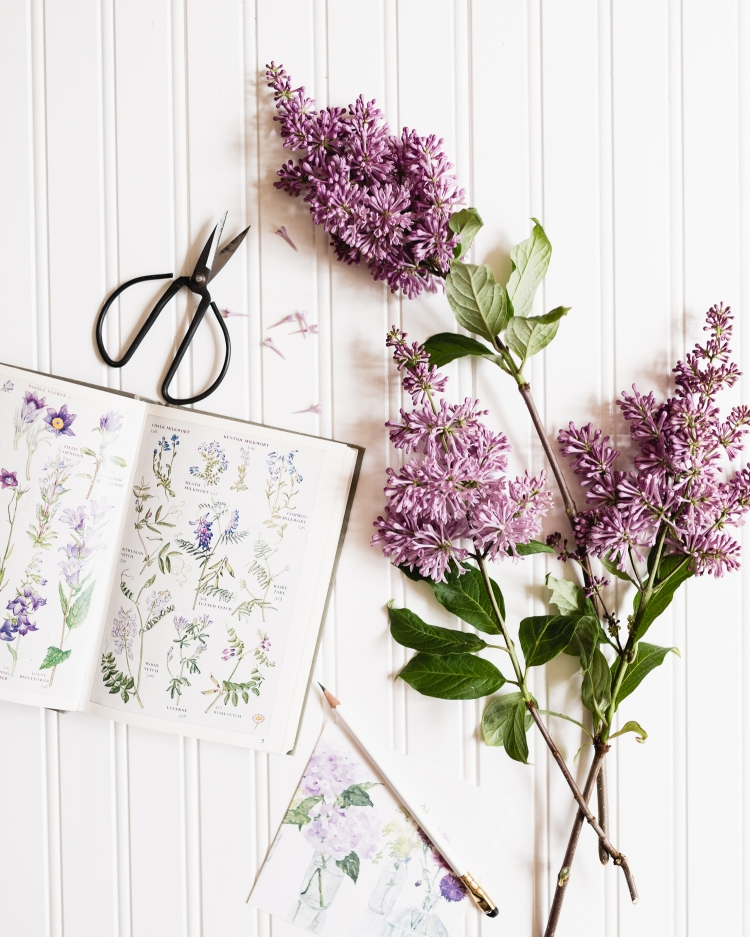 kpardell lilacs-20187773