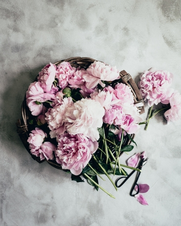 kpardell peony bunch--2
