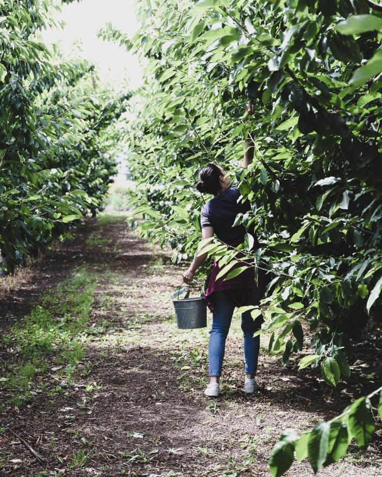 kpardell onair cherries-20202288