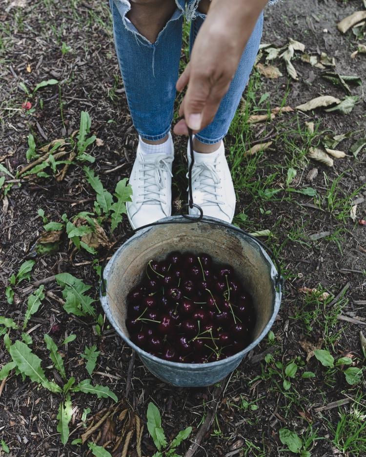 kpardell onair cherries-20202289